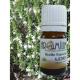 Aceite esencial AJEDREA BIO 5ml - Aromaterapia