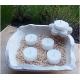 Vela de Té COCO cera vegetal, aromatica, Grande 20ml, 4 unidades