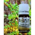 Aceite esencial INCIENSO puro Olibano 5ml - Aromaterapia