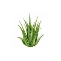 Champú efecto cosmético Aloe Vera 250ml