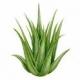Gel fijador capilar 50% Aloe Vera, 200ml