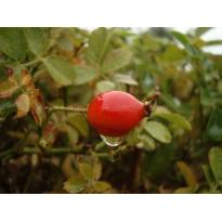 Aceite de Rosa Mosqueta y Aloe Vera 50ml.