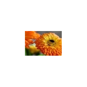 Gel de baño Aloe Vera y Caléndula 250ml