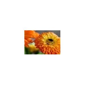 Gel de baño Aloe Vera y Caléndula 500ml